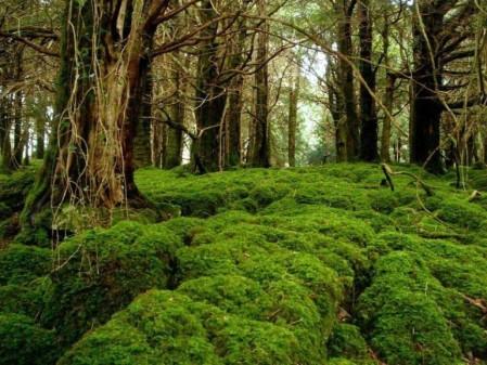 forestmoss