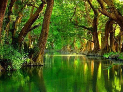 mangroveriver