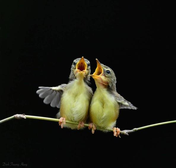 2babybirds