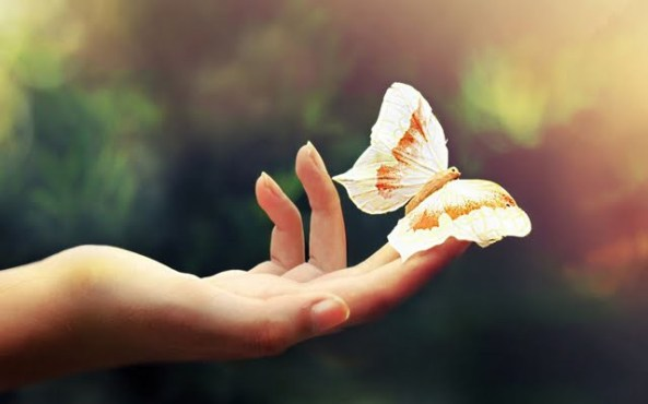 butterflyonhumanhand