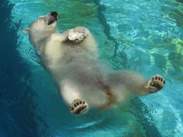 polarbearwater