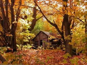 autumnshack