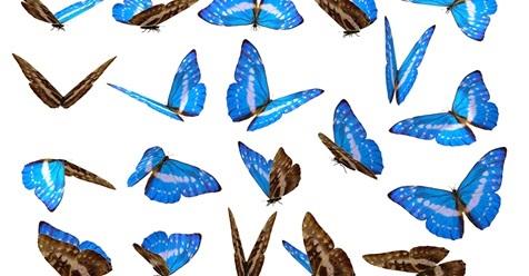 bluebutterflys102916