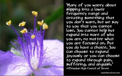 purpleflower10316