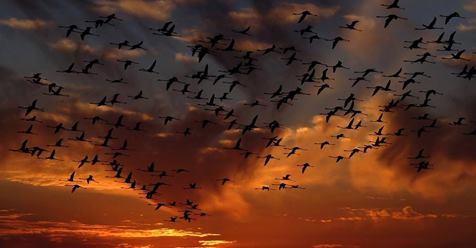 birdssky11716