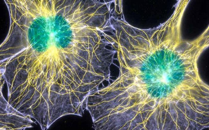 lightneurons
